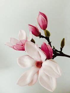 2406 Best Magnolia images in 2020 Magnolia Flowers