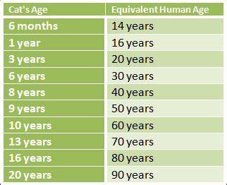 cat years chart cat age chart boulder bengals pet aging charts pinterest
