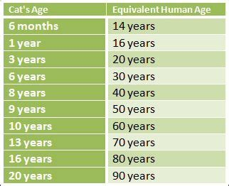 29 Best Pet Aging Charts Images On Pinterest  Cat Years