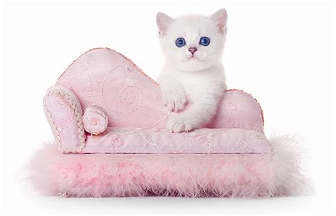 how to keep cats off outdoor furniture