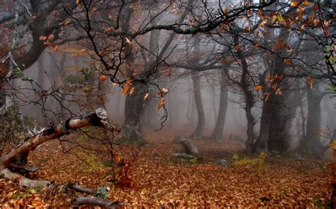 Fall Backgrounds Spooky by 43 Creepy Fall Wallpaper On Wallpapersafari