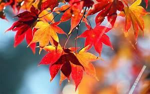 Schöne Herbstbilder Kostenlos : desktop hintergrundbilder herbst ~ A.2002-acura-tl-radio.info Haus und Dekorationen