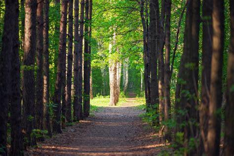 Dzimtas koka stādīšana   ''Smuku Muiža''