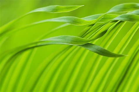Die Farbe Grün by Die Bilder Der Woche Kw 13 C T Fotografie