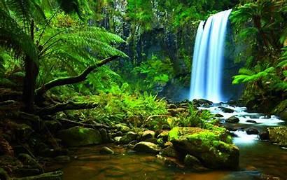 Rainforest Wallpapers Backgrounds Desktop Cool