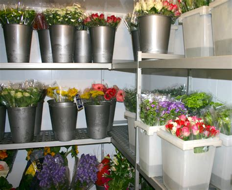 casaflor com chambre climatique pour fleurs coupées