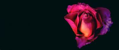 Rose Heart 3440 1440 Wallpapers Ultrawide Monitor