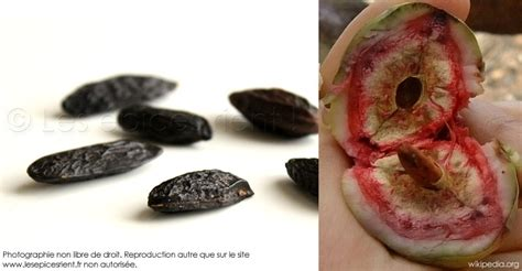 comment cuisiner des feves fève tonka de nouvelles idées pour la cuisiner les