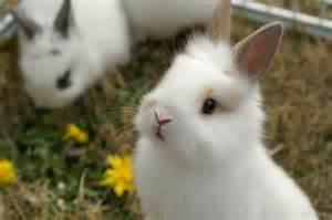 ウサギ:ウサギ