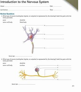 34 Drawing Of Neuron And Label Of Its Part