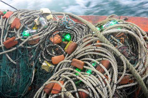 led lit fishing nets  save sea turtles indias endangered
