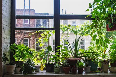 plants window sill shui feng potted cures
