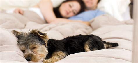 Sollten Hunde Mit Im Bett Schlafen?