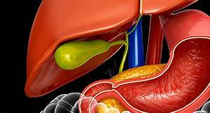 Visual Guide To Your Gallbladder