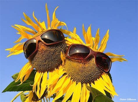 wettbewerb sonnenblume wir beide sind doch cool drauf