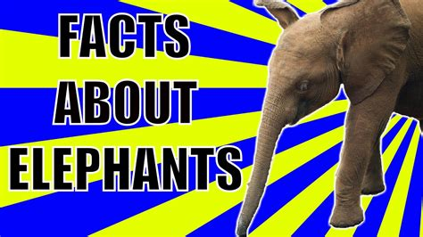 Amazing Animal Videos: Interesting Facts About Elephants ...