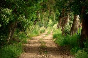 Free Images : landscape, tree, nature, forest, path ...