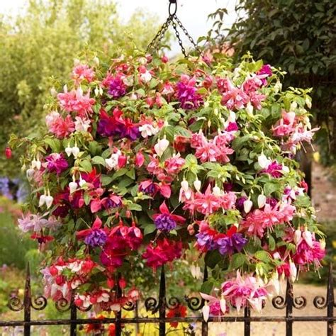 top 10 flowering plants for hanging baskets greenmylife anyone can garden