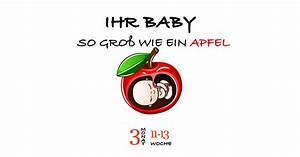 Schwangerschaft 3 Trimester : 1 trimester archive ~ Frokenaadalensverden.com Haus und Dekorationen