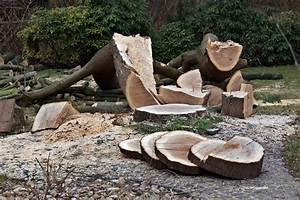 Tisch Aus Holz : tisch aus einer baumscheibe bauen ~ Watch28wear.com Haus und Dekorationen