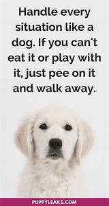 30 Cute & Funny Dog Quotes | Funny quotes, Dog and Dog ...