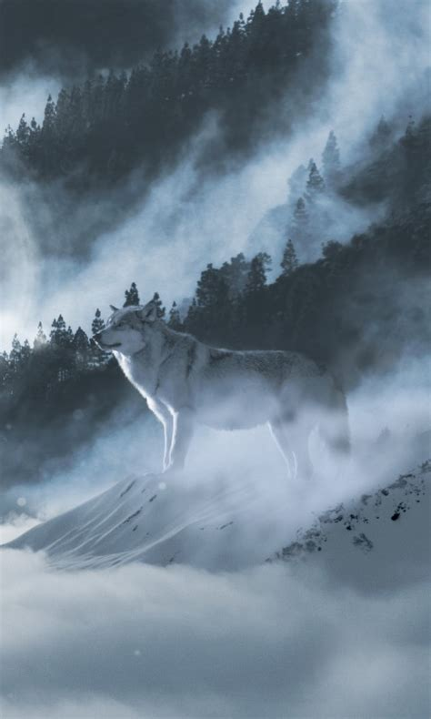 wallpaper arctic wolf white wolf winter mountains