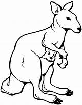 Kangaroo Coloring Pages Animals Wildlife Marsupial sketch template
