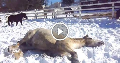 lovak jatszanak  hoban mint  gyerekek nagyon jo video