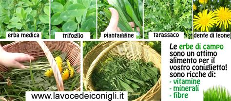 alimentazione conigli alimentazione conigli da carne 28 images