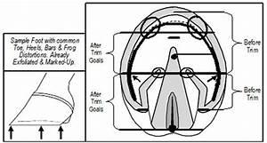 4 Step E L P O  Live Sole - Hoof Mapping Protocol