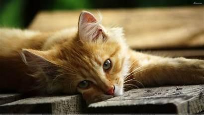 Cat Tabby Cats Wallpapers Orange Kitten Pretty