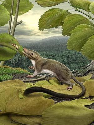 los mamiferos placentarios aparecieron tras la extincion