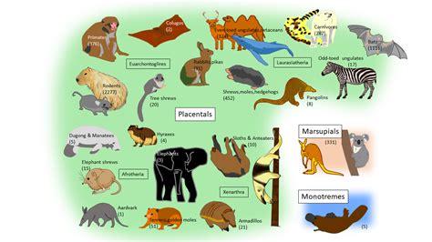 Mammal's Locomotion 2nd version