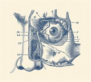 Human Eye And Tear Duct Diagram