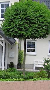 Hainbuche Baum Schneiden : garten anders formschnitt f r geh lze beispiele und tipps ~ Watch28wear.com Haus und Dekorationen