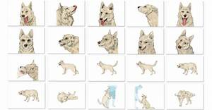 Quanto conosci il tuo cane?