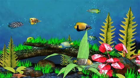 3d Animal Wallpaper 3d Fish Wallpaper - 3d tropical fish desktop wallpapers wallpapersafari