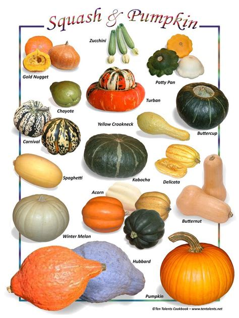 types of pumpkins the 25 best types of pumpkins ideas on pinterest names of spices pumpkin varieties and