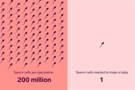 The Truth About Sperm Survival How Long Live