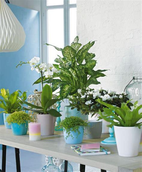 132 best images about truffaut plantes d int 233 rieur on cactus and interieur