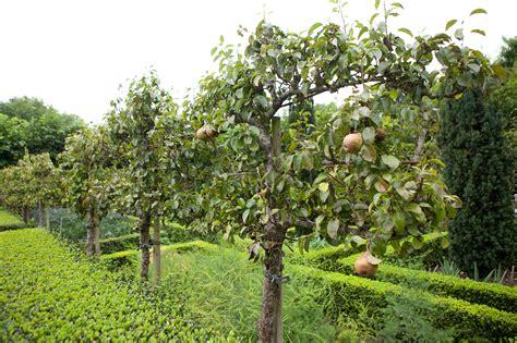How To Train A Fruit Tree Gardenersworldcom