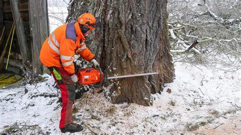 Einen Baum Faellen by K 252 Min Baumpflege Gmbh K 252 Min Baumpflege Gmbh