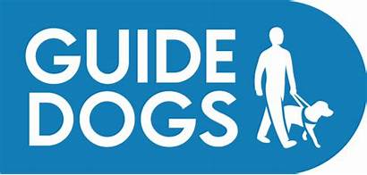 Guide Dogs Charity Dog Blind Puppies Buckfast