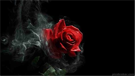 Download Free Cool Rose Wallpapers 4 Beautiful Collection