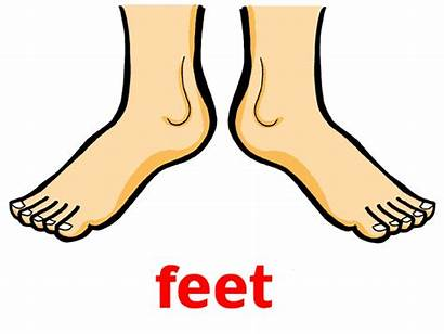 Feet Clipart Parts Evaluation Clipartmag