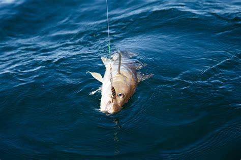 deep sea fishing winter florida fall advantages coast port