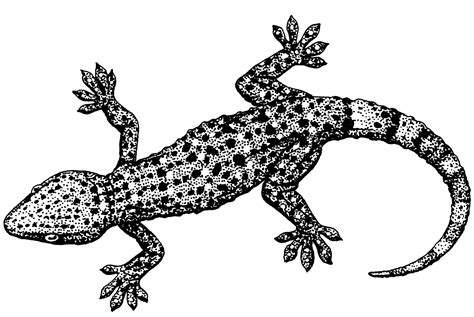 HD wallpapers komodo dragon coloring pages