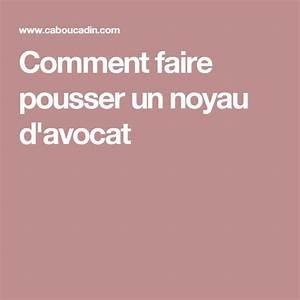 Best 25+ Faire Germer Un Avocat ideas on Pinterest Noyau