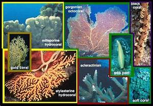 Coral Types And How To Recognize Them
