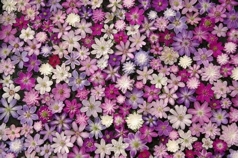 1000 images about flower collage on pinterest flower